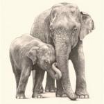 طراحی عکس حیوانات با مداد (۱)
