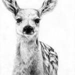 طراحی عکس حیوانات با مداد (۲)
