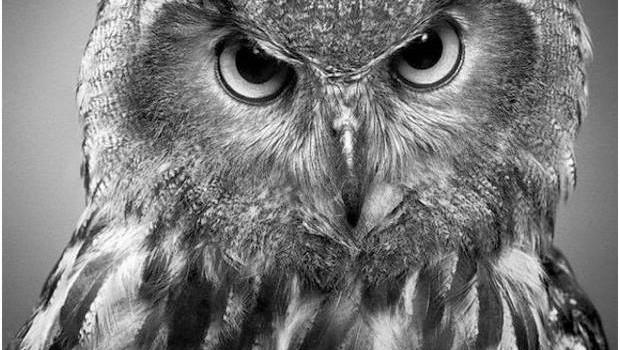 طراحی عکس حیوانات با مداد